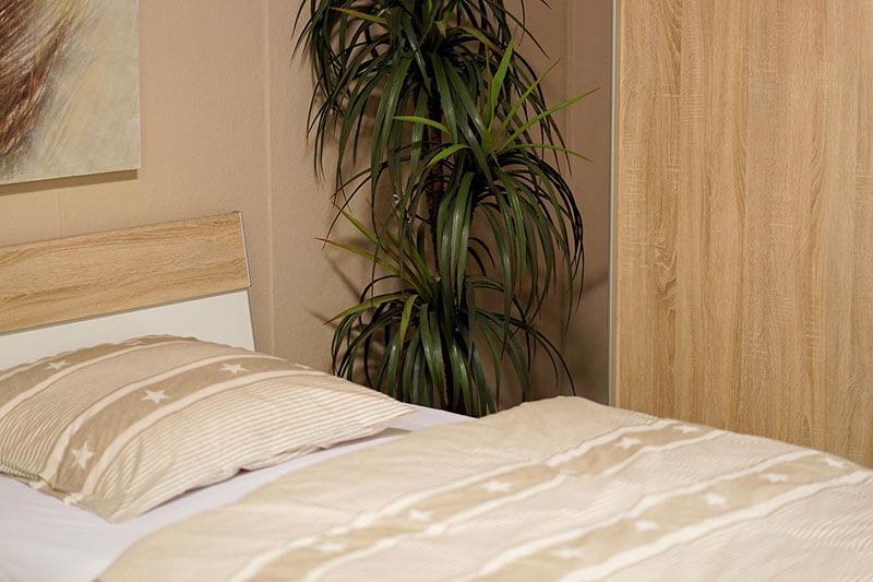 Le piante in camera da letto per favorire il sonno – CusciniBio